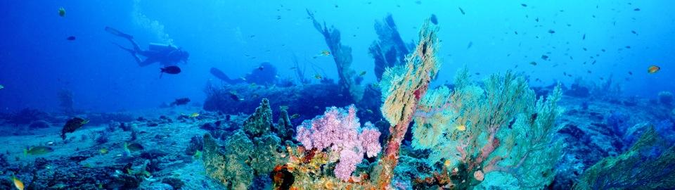 similan diving tachai